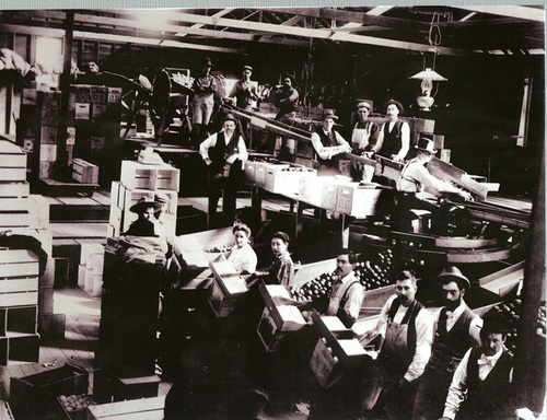 1890 Inside Placentia Packing house.jpg