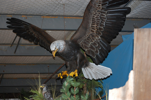 Rock Wall Eagle.jpg